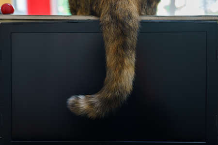 The cat sat on the counter and dropped its tail over the laptop screen. Imagens