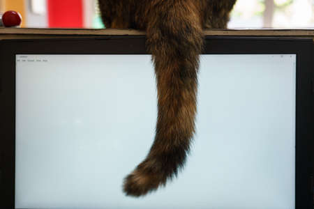 The cat sat on the counter and dropped its tail over the laptop screen. Reklamní fotografie