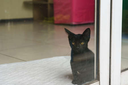 The male black kitten sat in the house looking out of the glass door.