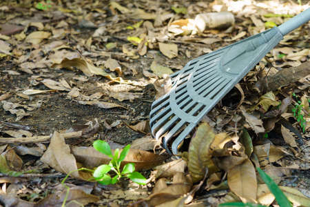 A plastic rake that rakes out dry leaves in the garden. Reklamní fotografie