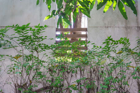 The window of the garden fence wall