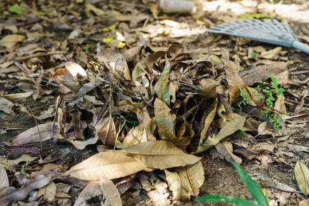 Piles of dry leaves in the garden that had fallen and were swept together