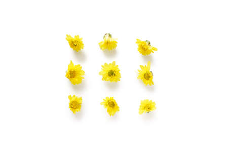 Yellow chrysanthemum flowers isolated on the white background