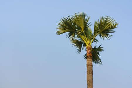 A palm tree and a blue sky background