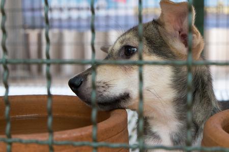 ojos tristes: abandonar perro callejero con ojos tristes en jaula de hierro Foto de archivo