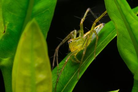 naughty: Naughty Spider