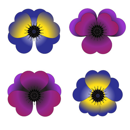 primula: Four colored violets with petels in a heart shape on the white background for your design Stock Photo