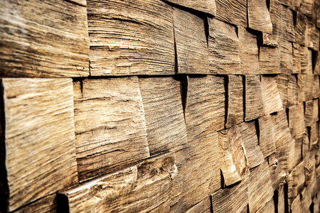 Dry pine wooden wall panels texture background.