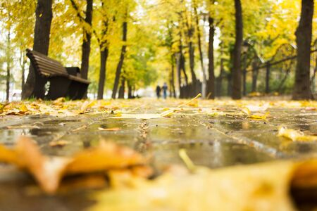 Blurred background of autumn park in rainy weather. Wet stone tiled path, bench, trees along the road and yellow fallen leaves on the ground with bokeh effect. Golden autumn concept.