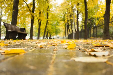 Blurred background of autumn day in rainy weather. Alley in park with wet stone tiled path, bench, trees along the road and yellow fallen leaves on the ground with bokeh effect. Golden autumn concept.