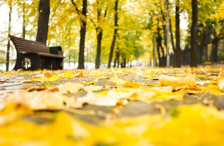 Blurred rainy autumn day background. Beautiful alley with bench, trees along the wet stone tiled road and yellow fallen leaves on the ground with bokeh effect. Golden autumn concept.