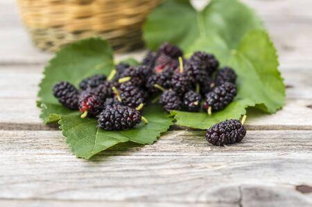 sycamore: Wild sycamore black berries Stock Photo