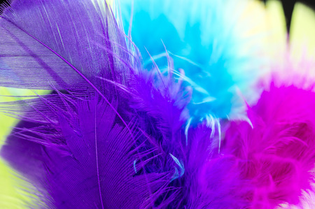 Close up shot of various colored feathers