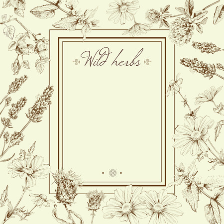 Vector vintage hand-drawn frame template illustration with wild flowers and herbs. Layout, mock up design for cosmetics, store, beauty salon, natural and organic Ilustração