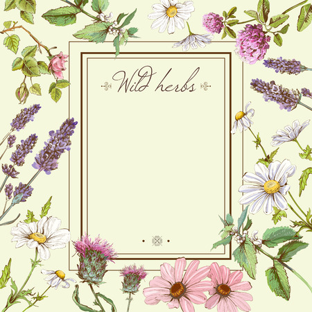 natural: Vector vintage colorful hand-drawn frame template illustration with wild flowers and herbs. Layout, mock up design for cosmetics, store, beauty salon, natural and organic