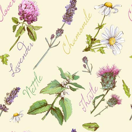 Vector Jahrgang nahtlose Muster mit wilden Blumen und Kräutern. Hintergrund-Design für Kosmetik, Geschäft, Schönheitssalon, Natur- und Bio-Produkten.