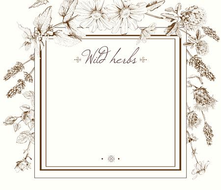 Vector uitstekende hand getrokken frame template illustratie met wilde bloemen en kruiden. Lay-out, mock-up ontwerp voor cosmetica, winkel, schoonheidssalon, natuurlijke en