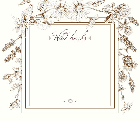 Vector vintage hand-drawn frame template illustration with wild flowers and herbs. Layout, mock up design for cosmetics, store, beauty salon, natural and