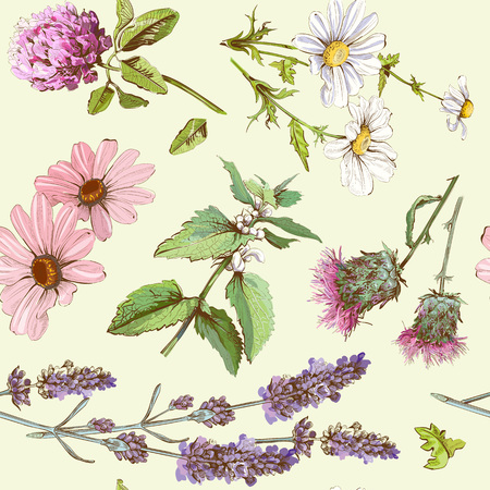 herb: Vector vintage seamless pattern with wild flowers and herbs. Background design for cosmetics, store, beauty salon, natural and organic products.