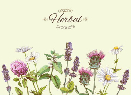 vintage banner with wild flowers and medicinal herbs. Design for cosmetics, store, beauty salon, natural and organic, health care products.Can be used like a greeting card.With place for text
