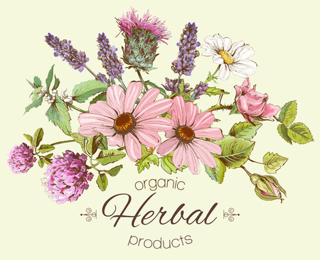 vintage hand-drawn composition with wild flowers and herbs. Design for cosmetics, store, beauty salon, natural and organic products. Can be used like a greeting card. Vettoriali