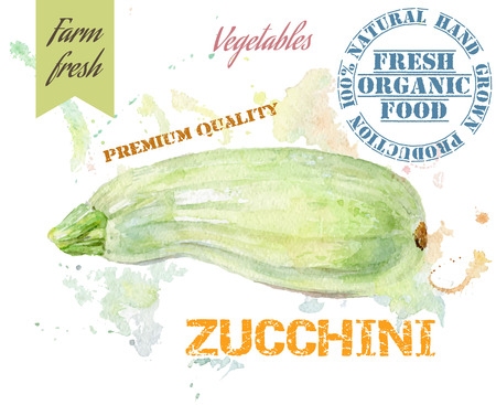 vegetable marrow: Hand painted watercolor illustration of zucchini with splashes on white background. Design for food, farmers production and vegetarian menu. Illustration