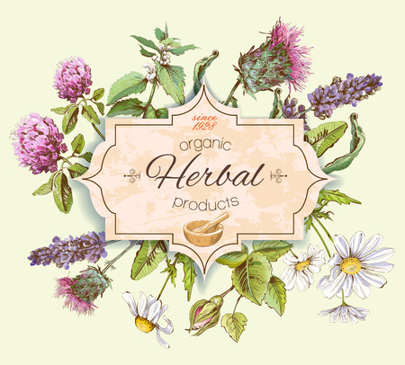 Vector Vintage-Banner mit wilden Blumen und Heilkräutern. Entwurf für Kosmetik, Geschäft, Schönheitssalon, natürlich und organisch, Gesundheitspflegeprodukte.