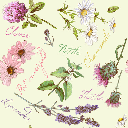 Vector seamless pattern with wild flowers and herbs. Background design for cosmetics, store, beauty salon, natural and organic products. Can be used as texture ,wrapping paper and fabric print Stock Illustratie