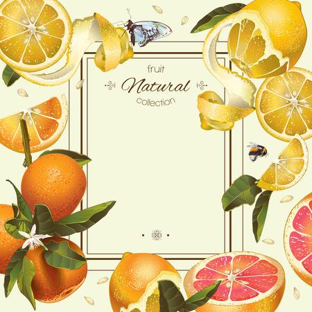 ベクトル レモン、ハイビスカスとローズヒップのビンテージ柑橘類のフレーム。お茶、ジュース、自然化粧品、パン、お菓子や柑橘類の充填、食料  イラスト・ベクター素材