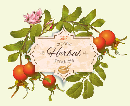 red berries: Vintage rosehip banner. Design for herbal tea, rosehip syrup, cosmetics, store, beauty salon
