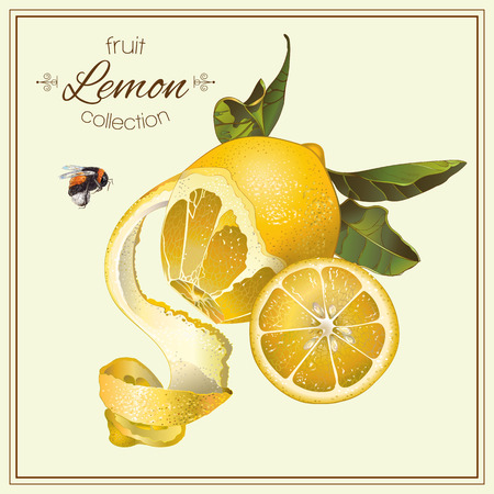 Vector realistic illustration of lemon with slice and bumblebee. Isolated on light green background. Design for tea, juice, natural cosmetics, baking, candy and sweets filling, grocery.