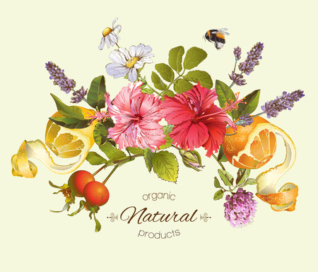 Vector natural composition with hibiscus flowers, citrus fruits and rose hip. Design for tea, juice, natural cosmetics, baking,candy and sweets,grocery,health care products. With place for text. Vettoriali
