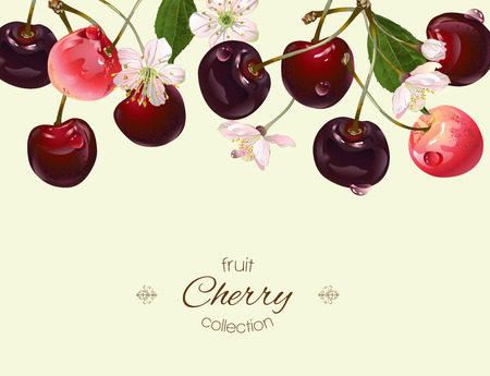 textile care: Vector cherry banner. Background design for juice, tea, natural cosmetics, bakery, sweets and candy with cherry filling, farmers marcet,health care products. Best for textile,wrapping paper. Illustration