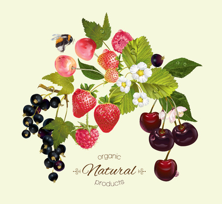 black berry: berry composition with raspberry, cherry, strawberry and black currant. Design for natural cosmetics, beauty store, vegetarian menu, organic health care products, summer design element Illustration