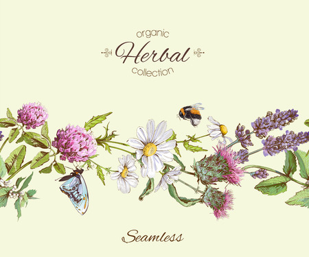herbal seamless horizontal border. Background design for herbal tea, natural cosmetics, health care products, homeopathy, aromatherapy. Best for packaging design. Фото со стока - 61115100