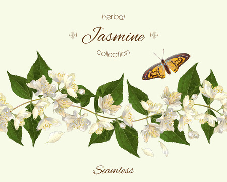 jasmine seamless horizontal border. Background design for herbal tea, natural cosmetics, health care products, homeopathy, aromatherapy. Best for packaging design.