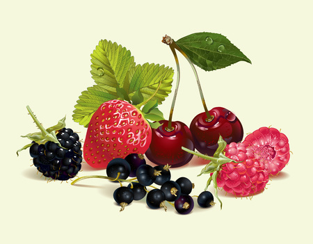 black berry: berry realistic illustration with raspberry, cherry, strawberry and black currant. Design for natural cosmetics, beauty store, vegetarian menu, organic health care products.