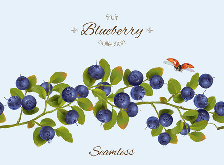blueberry seamless horizontal border. Background design for natural cosmetics,sweets and pasties filled with berry, food, grocery ,health care products. Best for packaging and web design.