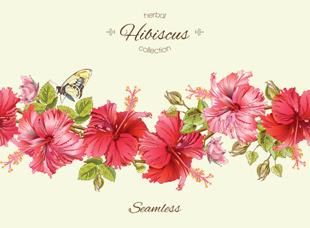 homeopathy: hibiscus seamless horizontal border. Background design for herbal tea, natural cosmetics, health care products, homeopathy, aromatherapy. Best for packaging design.