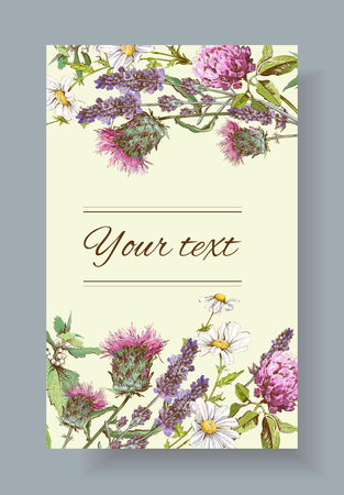 homeopathy: wild flowers and herbs banner. Design for herbal tea, natural cosmetics, honey, health care products, homeopathy, aromatherapy. With place for text Illustration