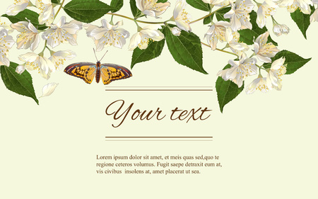 jasmine flowers horizontal banner. Design for tea, natural cosmetics, beauty store, organic health care products, perfume, essential oil, homeopathy, aromatherapy. With place for text Ilustração