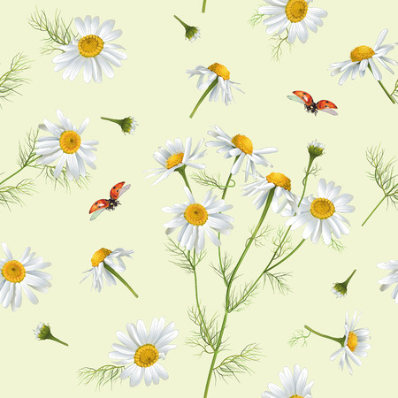 chamomile tea: Vector chamomile flower seamless pattern with ladybug. Design for herbal tea, natural cosmetics, health care products, aromatherapy, homeopathy. Best for print, wrapping paper