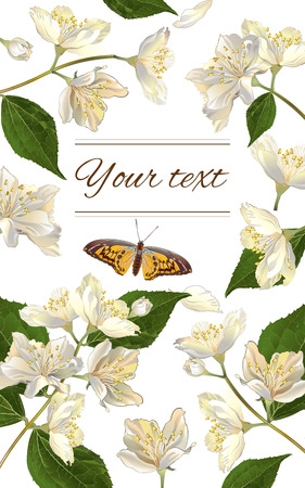health beauty: Vector jasmine flowers vertical banner. Design for tea, natural cosmetics, beauty store, organic health care products, perfume, essential oil, homeopathy, aromatherapy. With place for text