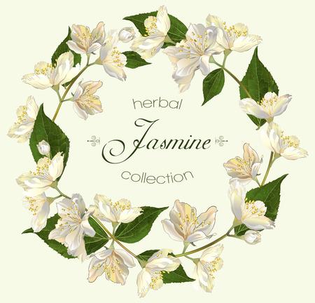 Vector Jasminblüten runden Banner. Entwurf für Tee, Naturkosmetik, Beauty-Shop, Bio-Gesundheitspflegeprodukte, Parfüm, ätherisches Öl, Homöopathie, Aromatherapie. Mit Platz für Text