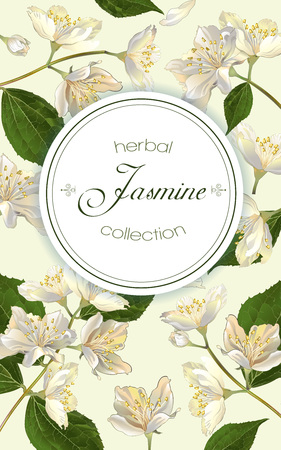 Vector jasmine flowers vertical banner. Design for tea, natural cosmetics, beauty store, organic health care products, perfume, essential oil, homeopathy, aromatherapy. With place for text
