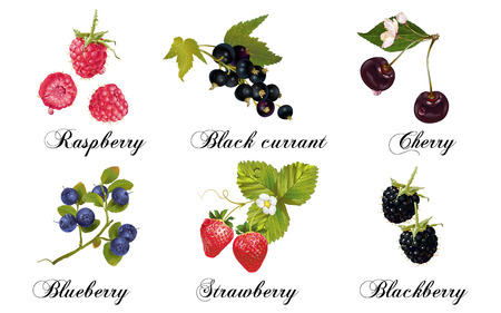 Vector realistic berries set isolated on white. Raspberry, cherry, strawberry, blackberry, blueberry and black currant. Design for natural cosmetics, sweets filled with berry, health care products.