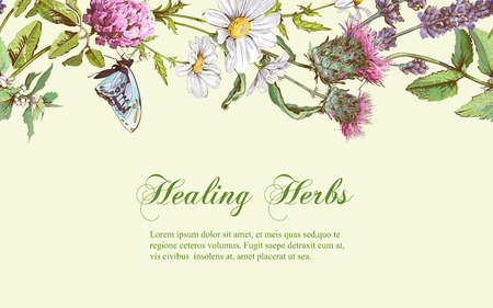 homeopathy: Vector wild flowers and herbs horizontal banner. Design for herbal tea, natural cosmetics, honey, health care products, homeopathy, aromatherapy. With place for text Illustration