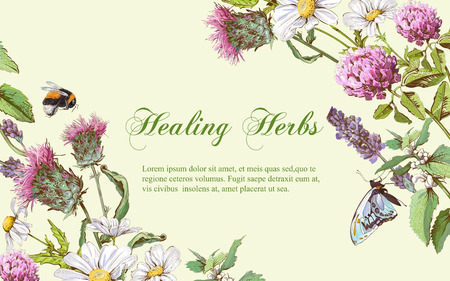 Vector wild flowers and herbs horizontal banner. Design for herbal tea, natural cosmetics, honey, health care products, homeopathy, aromatherapy. With place for text Çizim