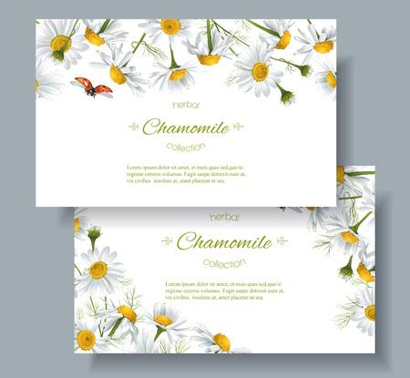 Vector Kamille bloem banners met lieveheersbeestje. Ontwerp voor kruidenthee, natuurlijke cosmetica, producten voor de gezondheidszorg, aromatherapie, homeopathie. Best voor print, inpakpapier Stock Illustratie