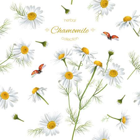 てんとう虫とベクトル カモミール花シームレス パターン。ハーブティー、自然化粧品、健康食品、アロマテラピー、ホメオパシーの背景デザイン。